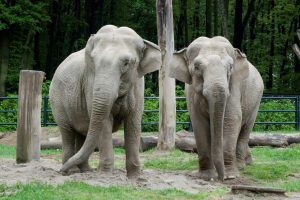 słonie w krakowskim zoo